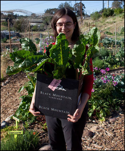 Erica with an overflowing box of kale and chard for our Friday potluck salad.