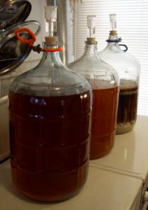 three carboys full of fermenting homebrew